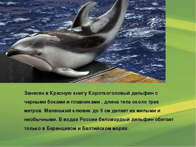 Занесен в Красную книгу Короткоголовый дельфин с черными боками и плавниками...