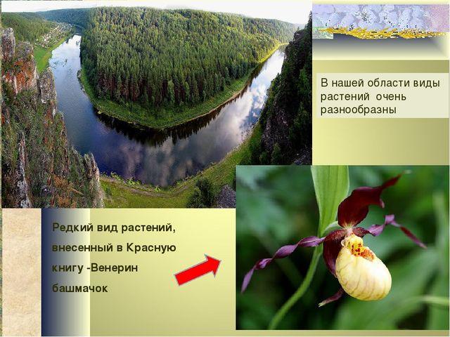 В нашей области виды растений очень разнообразны Редкий вид растений, внесенн...