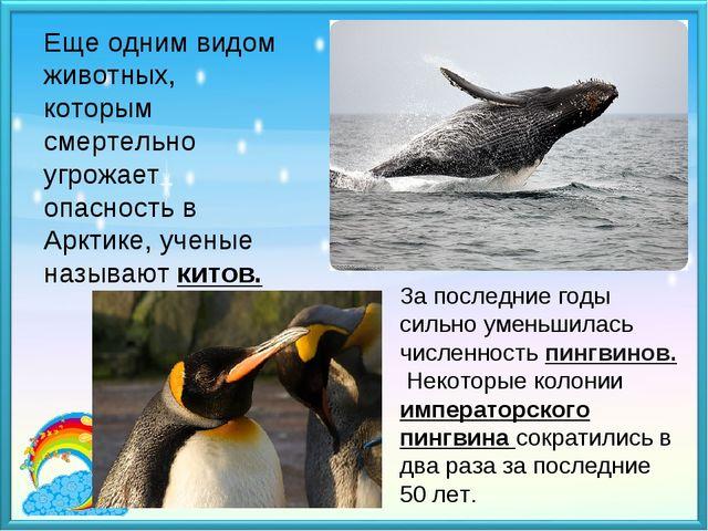 Еще одним видом животных, которым смертельно угрожает опасность в Арктике, уч...