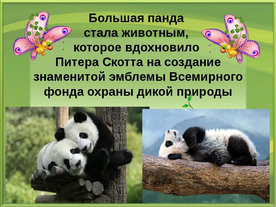 Большая панда стала животным, которое вдохновило Питера Скотта на создание зн...