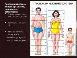 Пропорции всякого живого организма, развиваясь, изменяются Ребенок четырех-пя