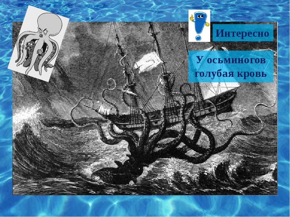 Интересно У осьминогов голубая кровь