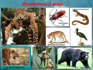Животный мир Уссурийский когтистый тритон Реликтовый жук Черный аист Дальнево