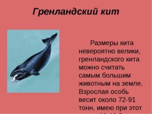 Гренландский кит Размеры кита невероятно велики, гренландского кита можно счи