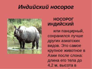 Индийский носорог НОСОРОГ ИНДИЙСКИЙ или панцирный, сохранился лучше других аз