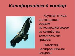 Калифорнийский кондор Крупная птица, являющаяся редким исчезающим видом из се