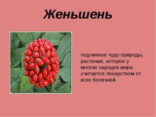 Женьшень подлинное чудо природы, растение, которое у многих народов мира счит