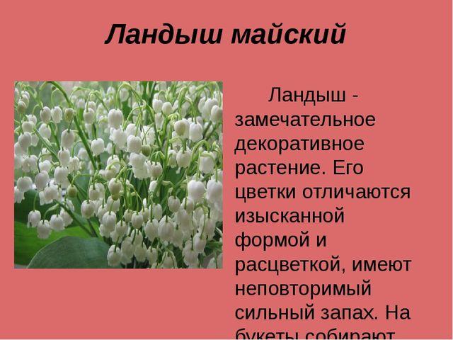 Ландыш майский Ландыш - замечательное декоративное растение. Его цветки отлич...