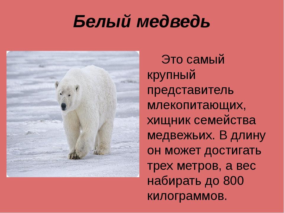 Белый медведь Это самый крупный представитель млекопитающих, хищник семейства...