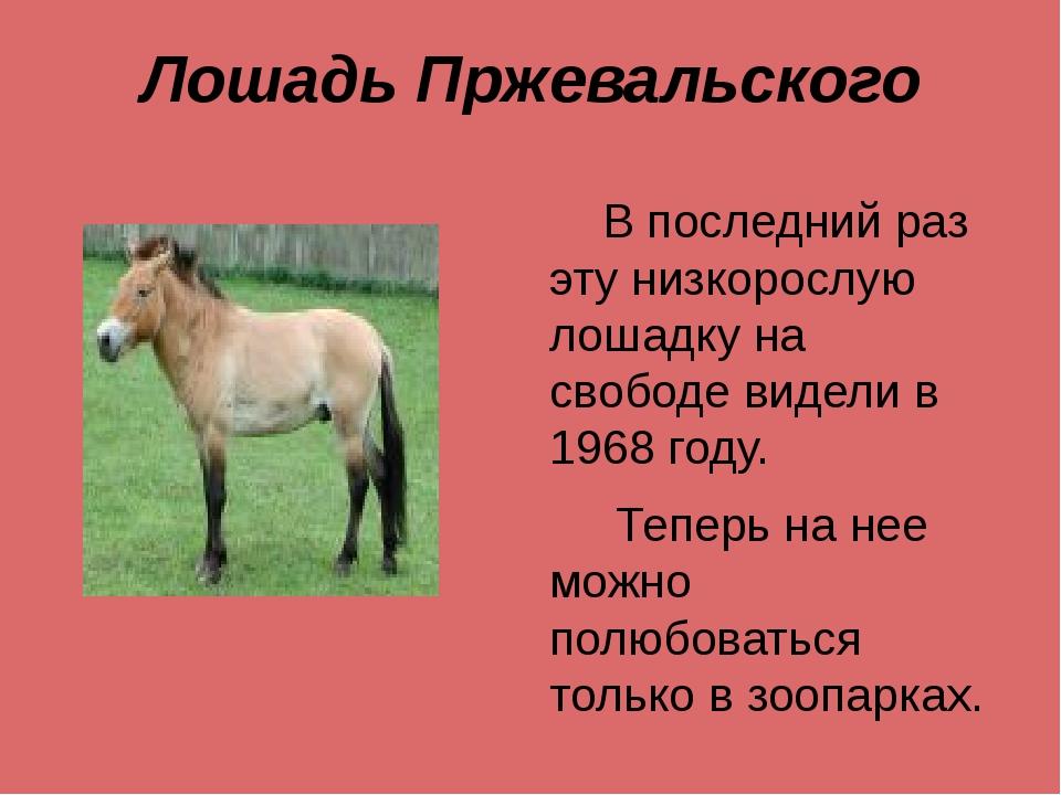 Лошадь Пржевальского В последний раз эту низкорослую лошадку на свободе видел...