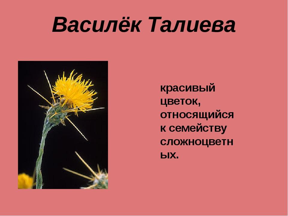 Василёк Талиева красивый цветок, относящийся к семейству сложноцветных.