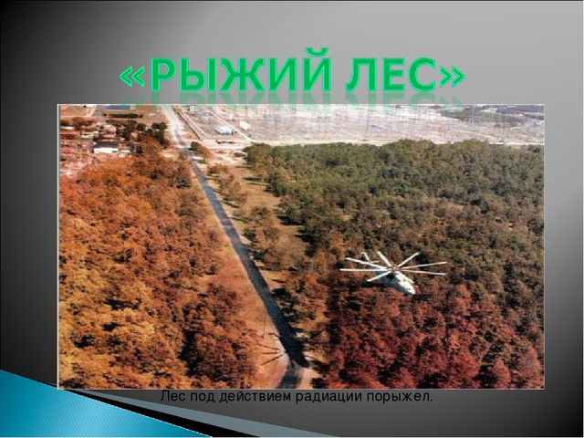 Лес под действием радиации порыжел.