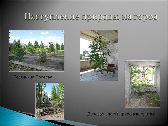 Гостиница Полесье. Деревья растут прямо в комнатах