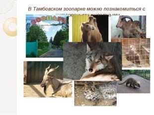 В Тамбовском зоопарке можно познакомиться с интересными животными