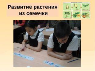 Развитие растения из семечки
