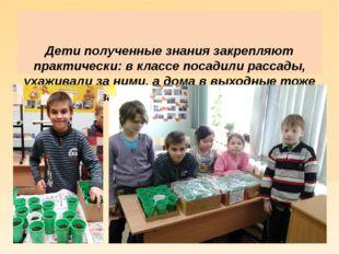 Дети полученные знания закрепляют практически: в классе посадили рассады, ух