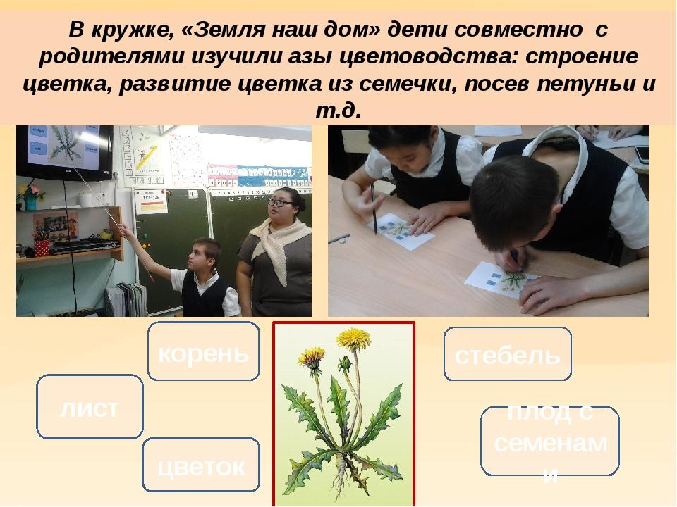В кружке, «Земля наш дом» дети совместно с родителями изучили азы цветоводств...