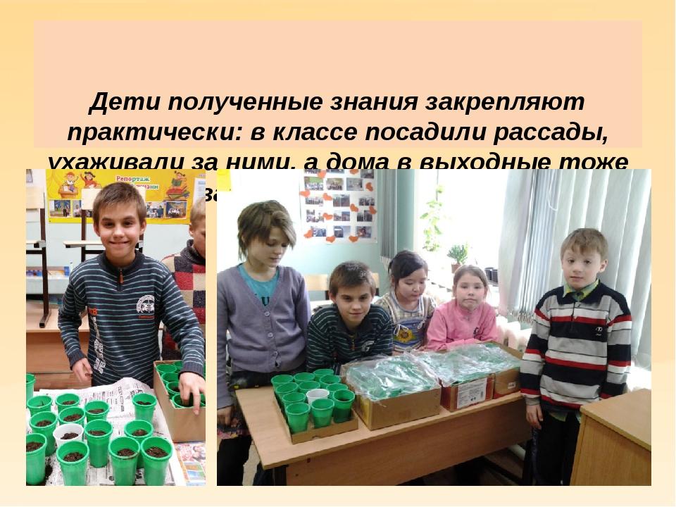 Дети полученные знания закрепляют практически: в классе посадили рассады, ух...