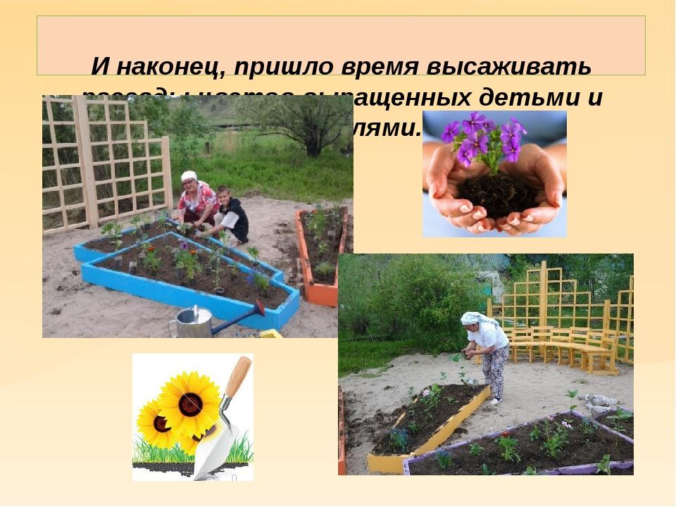 И наконец, пришло время высаживать рассады цветов выращенных детьми и родите...