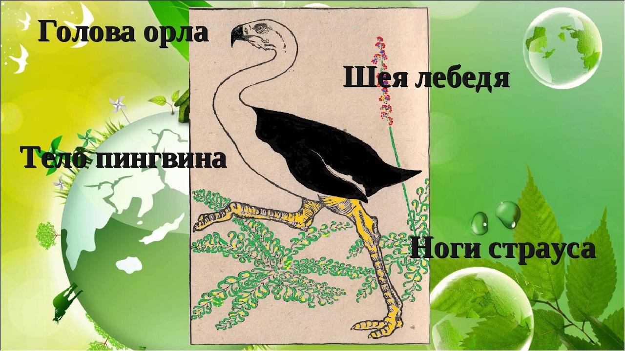 Голова орла Шея лебедя Тело пингвина Ноги страуса