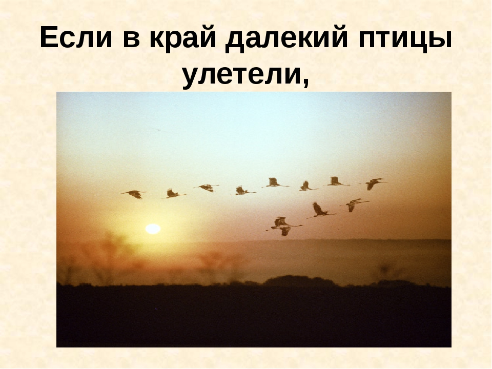 Если в край далекий птицы улетели,