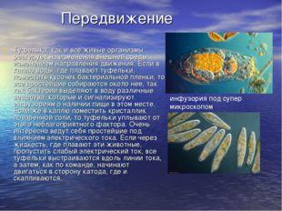 Передвижение Туфелька, как и все живые организмы, реагирует на изменения вне