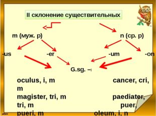 II склонение существительных m (муж. р) n (ср. р) -us -er -um -on G.sg. –I oc
