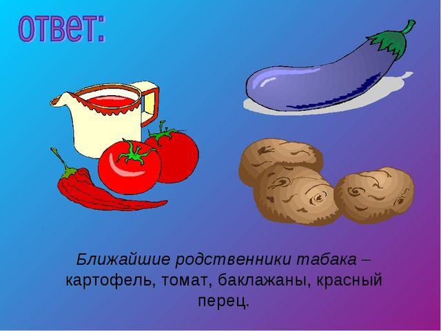 Ближайшие родственники табака – картофель, томат, баклажаны, красный перец.
