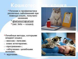 Кошкотерапия: кошка лечит человека. Лечение и профилактика различных заболева