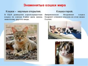 Знаменитые кошки мира Кошки – научные открытия. В США домашняя короткошерстна