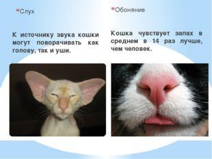 Слух К источнику звука кошки могут поворачивать как голову, так и уши. Обонян