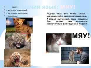 Кошачий язык: МЯУ! МЯУ! - котенок домашний; - детёныш леопарда; - тигрёнок! М