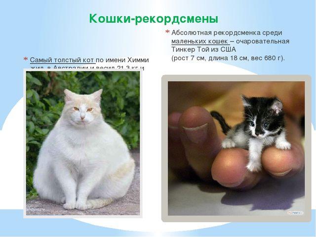 Самый толстый кот по имени Химми жил в Австралии и весил 21,3 кг и имел обхв...