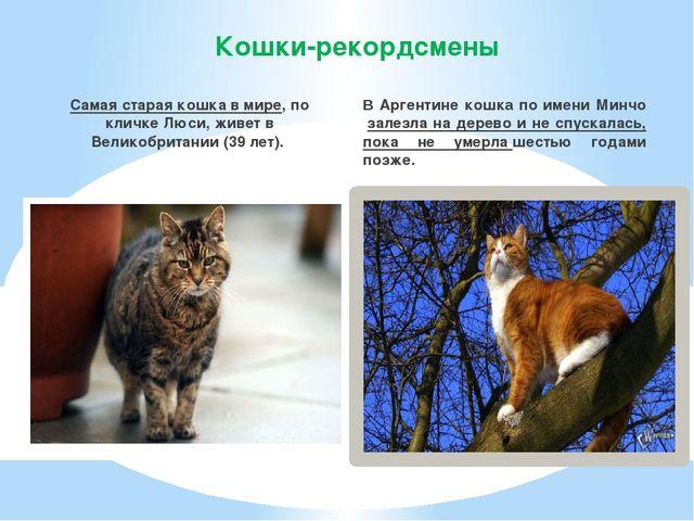 Кошки-рекордсмены Самая старая кошка в мире, по кличке Люси, живет в Великобр...