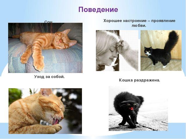 Поведение Сон. Уход за собой. Хорошее настроение – проявление любви. Кошка ра...
