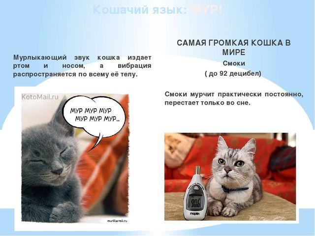 Кошачий язык: МУР! Мурлыкающий звук кошка издает ртом и носом, а вибрация рас...
