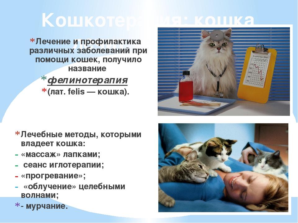 Кошкотерапия: кошка лечит человека. Лечение и профилактика различных заболева...