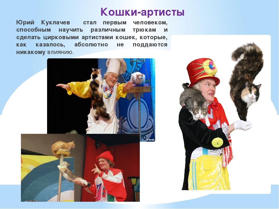 Кошки-артисты Юрий Куклачев стал первым человеком, способным научить различны...