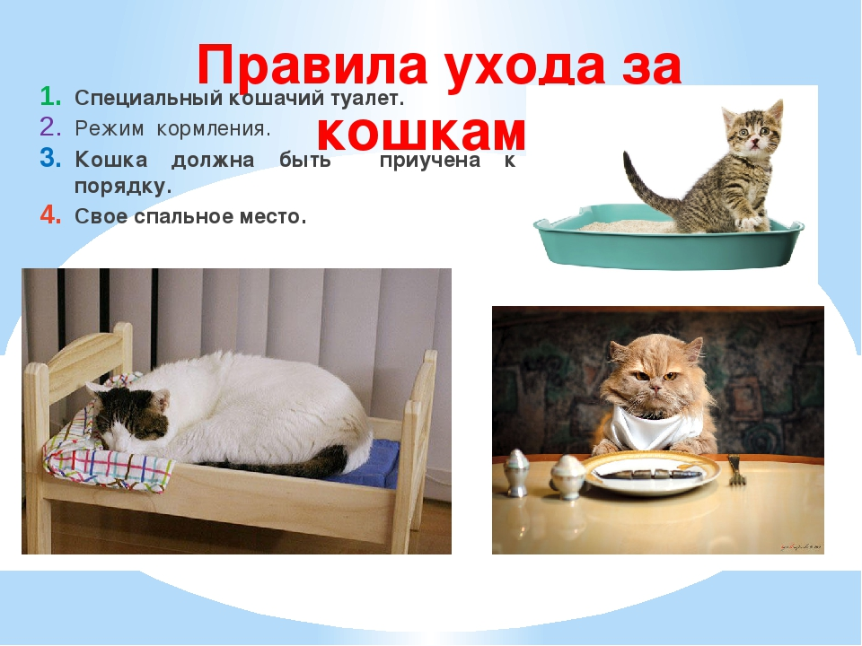 Правила ухода за кошками Специальный кошачий туалет. Режим кормления. Кошка д...