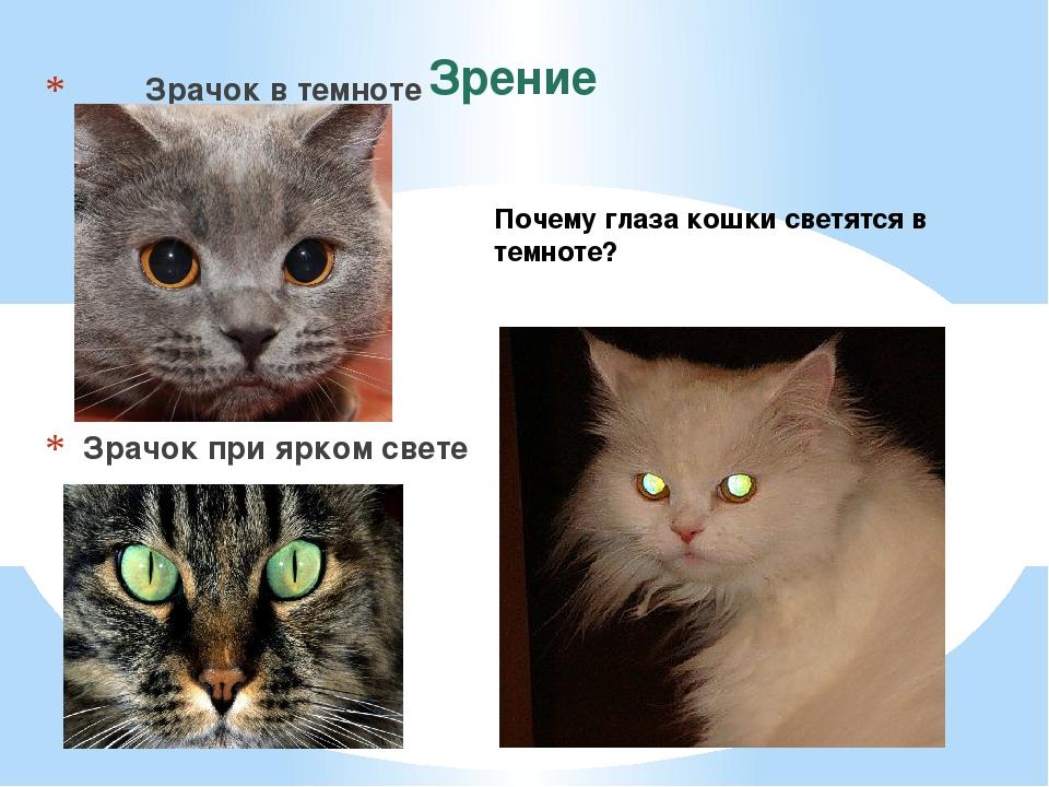 Зрение Зрачок в темноте Зрачок при ярком свете Почему глаза кошки светятся в...