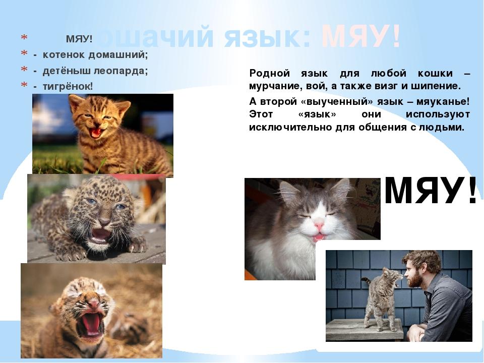 Кошачий язык: МЯУ! МЯУ! - котенок домашний; - детёныш леопарда; - тигрёнок! М...