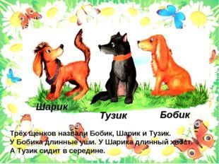 Тузик Бобик Шарик Трёх щенков назвали Бобик, Шарик и Тузик. У Бобика длинные