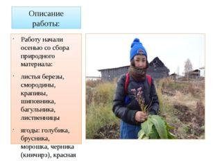 Описание работы: Работу начали осенью со сбора природного материала: листья б
