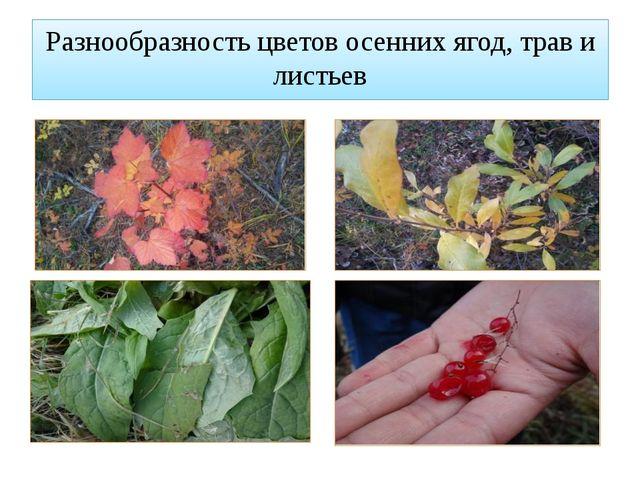 Разнообразность цветов осенних ягод, трав и листьев