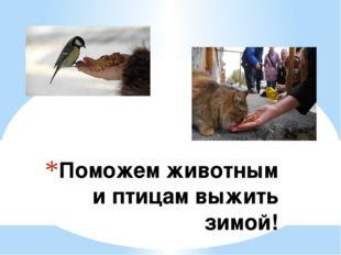 Поможем животным и птицам выжить зимой!