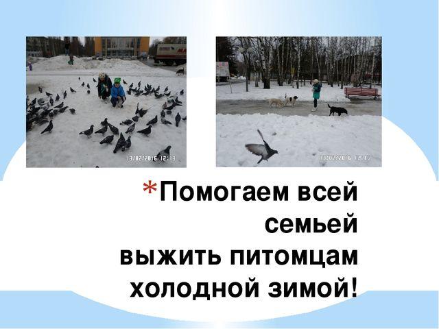 Помогаем всей семьей выжить питомцам холодной зимой!