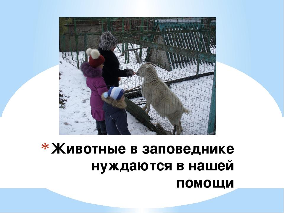 Животные в заповеднике нуждаются в нашей помощи