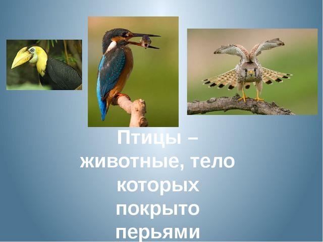 Птицы – животные, тело которых покрыто перьями
