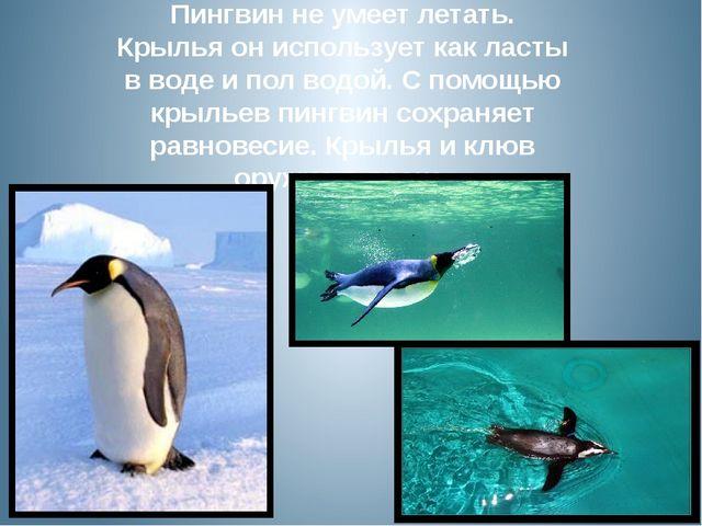 Пингвин не умеет летать. Крылья он использует как ласты в воде и пол водой. С...