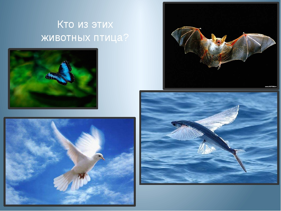 Кто из этих животных птица?